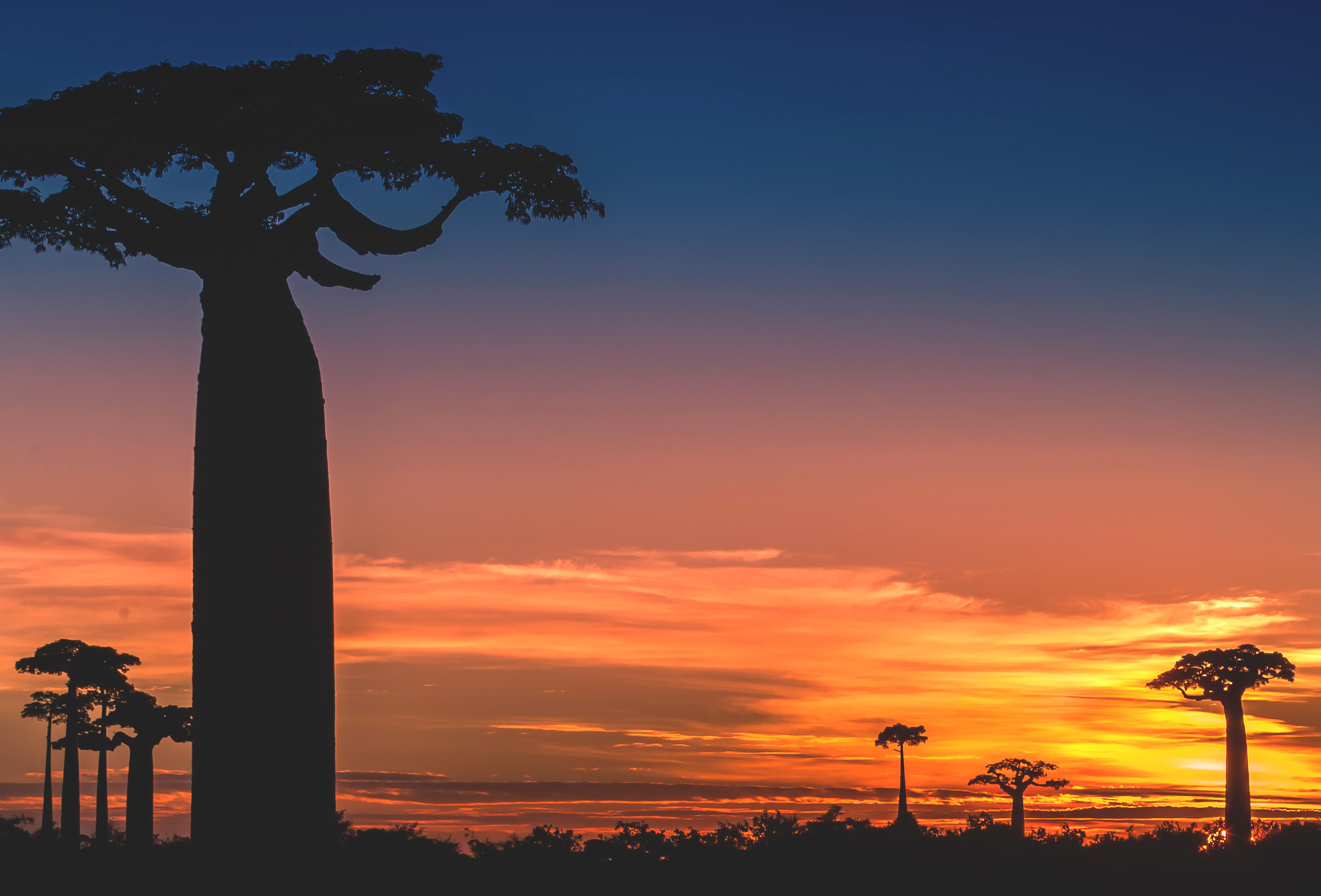 pulpa ecologica de baobab